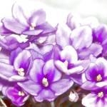 """""""Light Flowers"""" by DaveScott"""