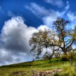 """Lone tree along US 101"" by agroth"