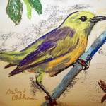 """111811 Yellow Warbler"" by garlandoldham"