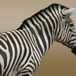 """Zebra Zoom"" by Dullinger"