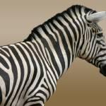 """Zebra Zoom"" by Dullinger"