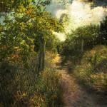 """Dune Path"" by JohnRivera"