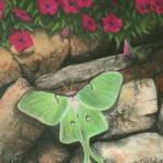 """Luna Moth and Petunias"" by evansonart"