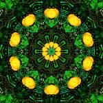 """Yellow & Green Poppy Kaleidoscope Mandala"" by TigerLynx"