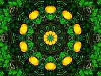 Yellow & Green Poppy Kaleidoscope Mandala