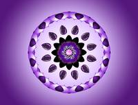 Purple Flower Mandala Kaleidoscope