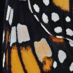 """Monarch Butterfly Wing Abstract No4"" by evansonart"