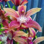 """Orchids"" by SuSu"