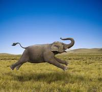 Galloping Elephant
