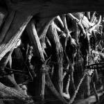 """Reflection of Roots B&W"" by nakedeyephotography"