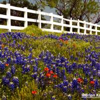 Texas Spring Art Prints & Posters by Brian Kerls