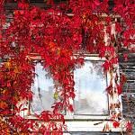 """Autumn window"" by Yury"