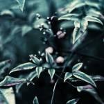 """""""Darkened Blue"""" by GRphoto"""