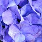"""""""blue"""" by prbanana"""
