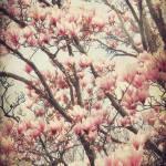 """""""Magnolia"""" by tracyjade"""