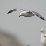 """Gulls"" by WildAboutNaturePhotography"
