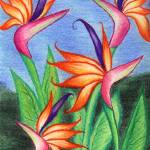 """Birds of Paradise"" by ginster"