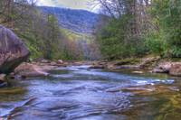 Williams River in Spring