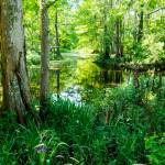 """""""Spring On The Bayou"""" by Lorraine_Sommer"""