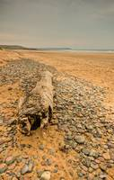 Freshwater West, Pembrokeshire Driftwood 2