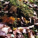 """mushroom"" by erinlanzendorfer"