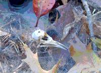 Bird Skeleton Abstract No2
