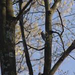 """""""woodpecker"""" by erinlanzendorfer"""