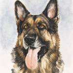 """German Shepherd"" by BarbBarcikKeith"