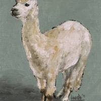 White Alpaca Art Prints & Posters by Harry Boardman