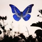 """Butterfly"" by PitCrewArt"