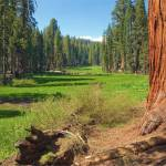 """Log Meadow, Sequoia National Forest"" by G-Studios"