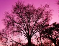 Ponderously Pink4