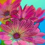 """""""Pink Daisies"""" by ginacormier"""