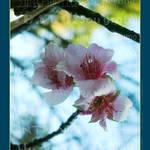 """""""Flower / Flor"""" by Soubem"""
