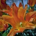 """Orange Splash"" by SederquistPhotography"