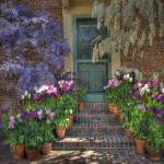 """Wisteria, Tulips and Doorway"" by SederquistPhotography"
