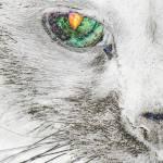 """Cat's Eye Abstract"" by evansonart"