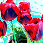 """Solar Tulips"" by evansonart"