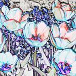 """Tulip Flower Abstract"" by evansonart"