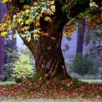"""old tree"" by bbstudios"