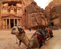 Petra and Camel