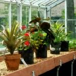 """""""Plants in Greenhouse"""" by susansartgallery"""