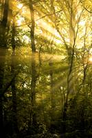 Sunrays Through the Trees