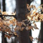 """Aspen Leaves 20120318_198a"" by Natureexploration"
