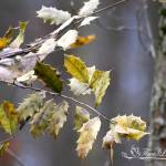 """Tree, Branch, and Leaves 20120322_175a"" by Natureexploration"