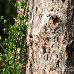 """Tree, Branch, and Leaves 20120326_109a"" by Natureexploration"