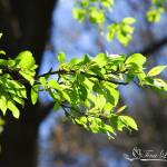 """Tree, Branch, and Leaves 20120402_135a"" by Natureexploration"