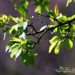 """Tree, Branch, and Leaves 20120402_191a"" by Natureexploration"