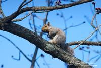 Squirrel 20120405_313a