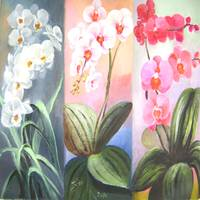 butterfly orchids trio